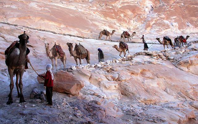photo of a camel train descending a slope