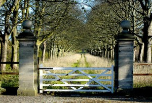 Photo of an old marble gate into a road between two lines of trees