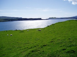 photo of sheep on a hillside in Skye Ireland