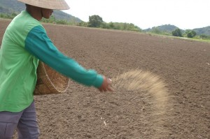 photo of Asian farmer sowing rice seeds