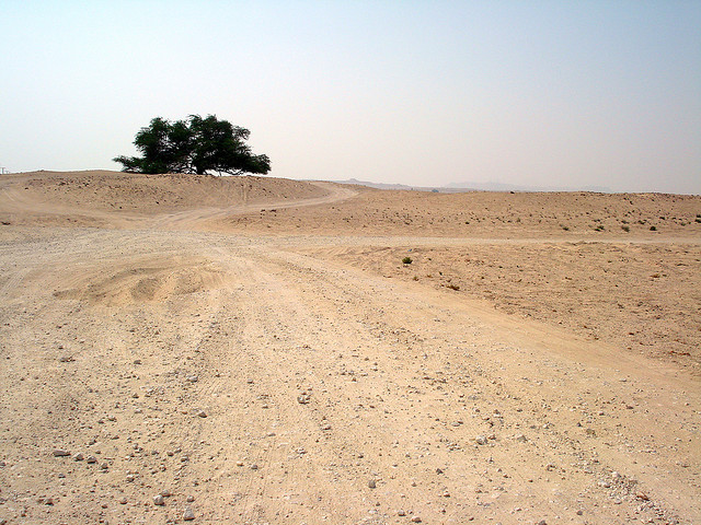 photo of a tree surrounded by desert