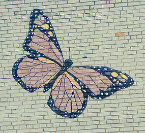 butterfly on brick wall