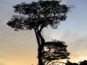 photo of tree at sunrise
