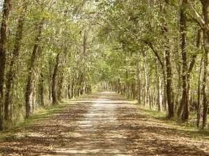 photo of a sunlit lane with trees arching over